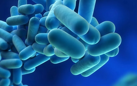 What is legionnaire's disease & legionella?